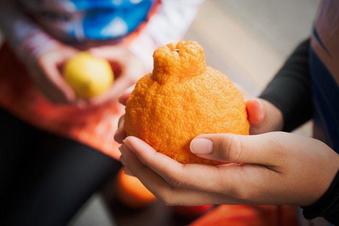 Ehime mandarin orange